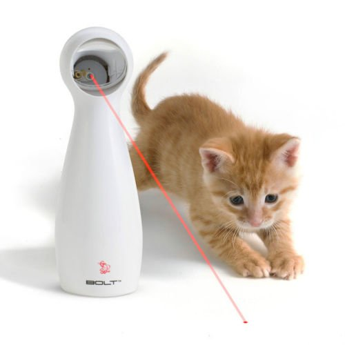 Hours of fun for your cat